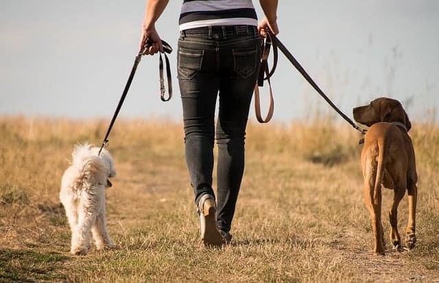 la mujer camina con los perros